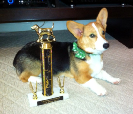 Sadie @ 5 months old - Corgi Owner: Watson in Paragould, AR - Click Image to Close